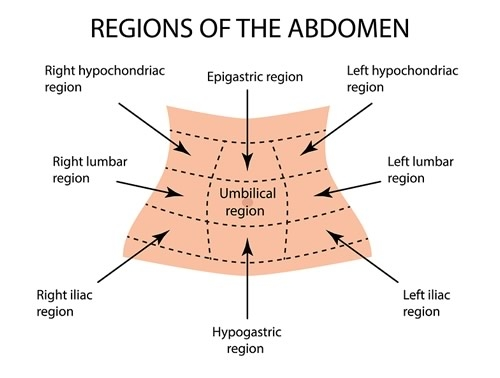 Regions of the Abdomen
