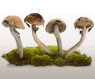Magic Mushrooms as Medicine? Mind-Body Connection Pt. 3