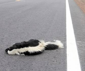 Roadkill Cuisine Perks and Pitfalls