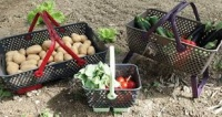 Gardening and preserving food