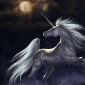 NoctuRNal_UnicoRN