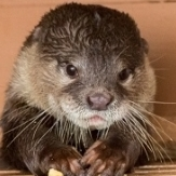 riverotter