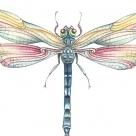 Dragonfly.RN