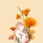 MidwifeyToBe MSN RN