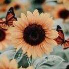 SunflowerScript