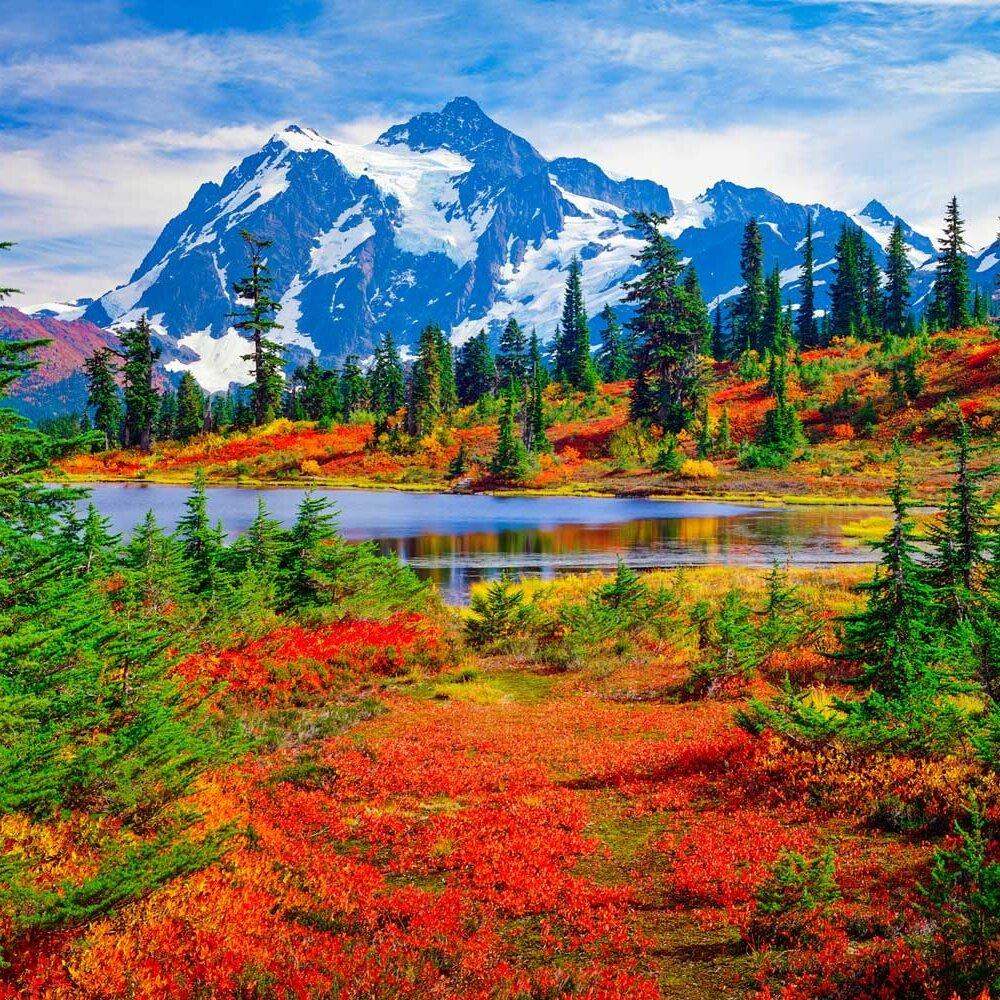 Flora-of-the-North-Cascades-National-Park-images-Pinterest.jpg.d7ff15a97904f6df66906596949005e9.jpg
